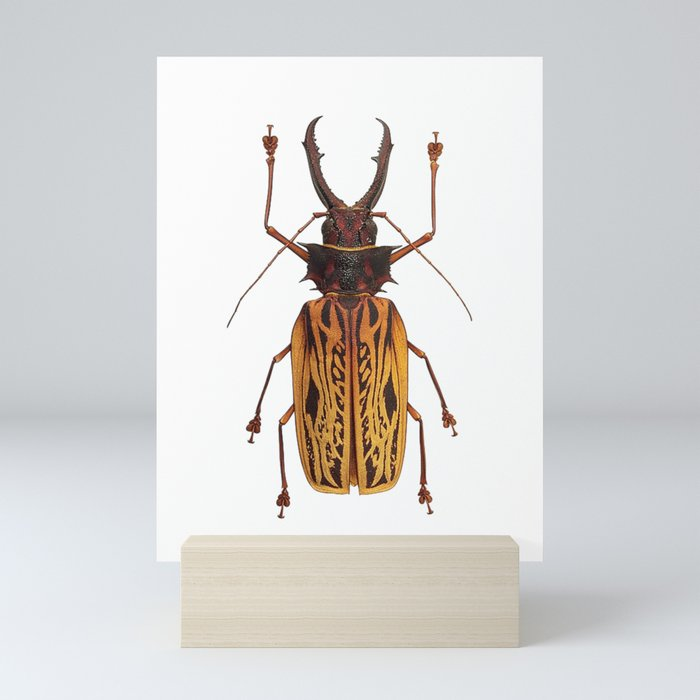 Macrodontia Cervicornis Sabertooth Beetle Mini Art Print