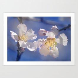 """Winter spring"". Almond flowers. Art Print"