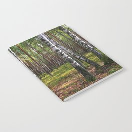 Birch forest Notebook