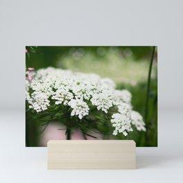 White Queen Ann's Lace Mini Art Print
