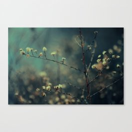 blossom. Canvas Print