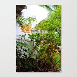 Dreamy Mexican Trumpets Canvas Print