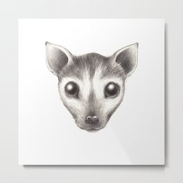 Spectacled Flying Fox Metal Print