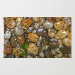 Top View of wet rock backgrounds in the tropical garden in 4:3 Ratio. Rug