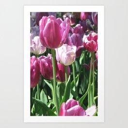 Pink and Purple Tulips Art Print
