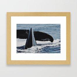 Whale Splash Framed Art Print