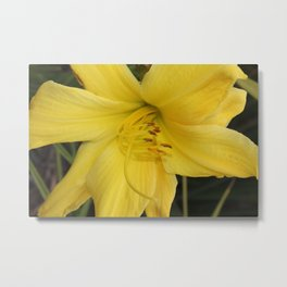 Yellow Daffodil Metal Print