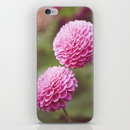 Chrysanthemums in Afternoon Light iPhone Skin