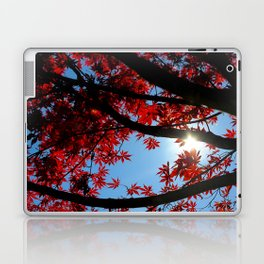 Japanese maple in scarlet against blue fall sky Laptop & iPad Skin