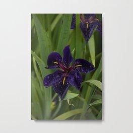 Velvet Iris Metal Print