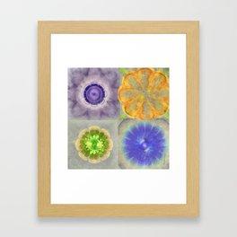 Craterless Incubus Flower  ID:16165-022103-01500 Framed Art Print