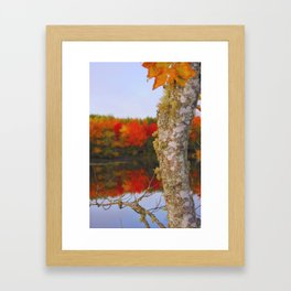 Beauty And The Birch Framed Art Print
