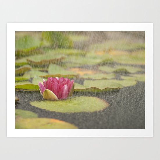 Water lily in the rain Art Print