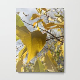 Unfollen Yellow Leaves Metal Print