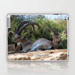 Israeli Ibex Laptop & iPad Skin
