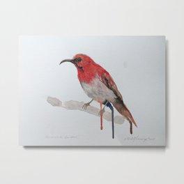 Watercolour Temminck's Sunbird Metal Print