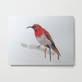 Watercolour Temminck's Sunbird Metal Print