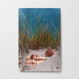 Big shells in the sand Metal Print