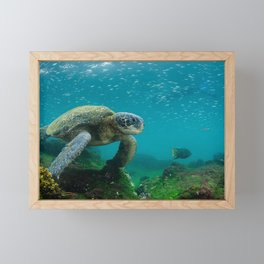 Galápagos Islands, Ecuador Framed Mini Art Print