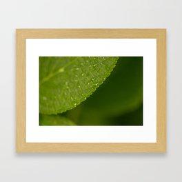 Floral Leaf 05   Nature Photography Framed Art Print