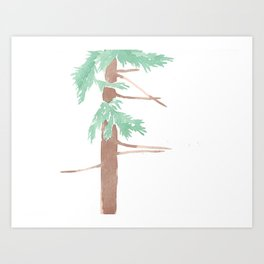 Sequoia sempervirens Study Art Print