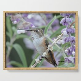 Ms. Hummingbird's Break Time in Mexican Sage Serving Tray