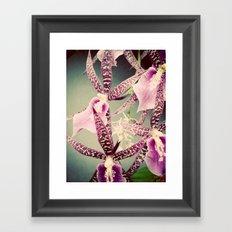 Orchid Love 2 Framed Art Print