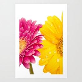 Floral Gerbera iPhone Case Art Print