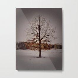 Mature Winter Oak Metal Print