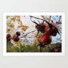 Autumn Rosehip Art Print