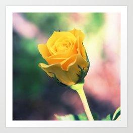 Young Rose Art Print
