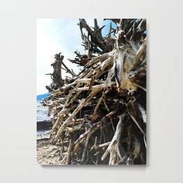 Weathered Roots Metal Print