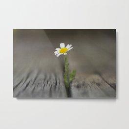 simply daisy Metal Print