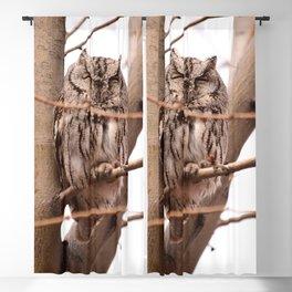 Wild Owl - Ivins, Utah Blackout Curtain