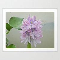 Flower In The Rain Art Print