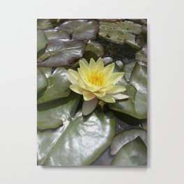 yellow water lily VII Metal Print