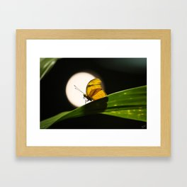 Butterfly and the Moon Framed Art Print