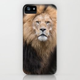 Closeup Portrait of a Male Lion iPhone Case