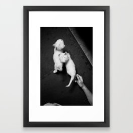 kittens! Framed Art Print