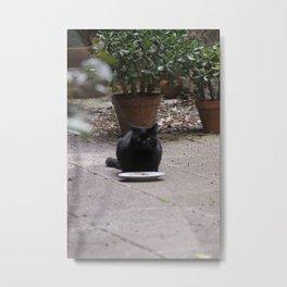 Stray Black Cat Metal Print