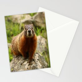 On The Rocks Marmot Stationery Cards