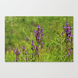 Wonderfully Wild Canvas Print