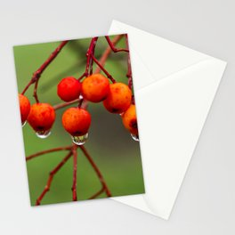 Rowan Berries with Water Droplets Stationery Cards
