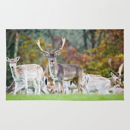 FALLOW DEER WITH SOMETHING TO SAY Rug