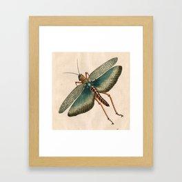 Big Grasshopper Framed Art Print