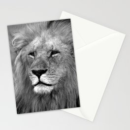 Masai Mara Lion Stationery Cards