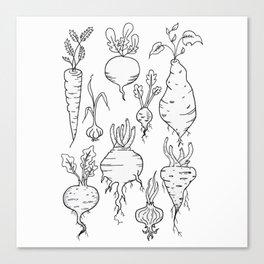 Root Vegetable Study Illustration Canvas Print