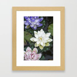 3 Lotus Flowers Framed Art Print