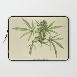 Vintage botanical print - Cannabis Laptop Sleeve