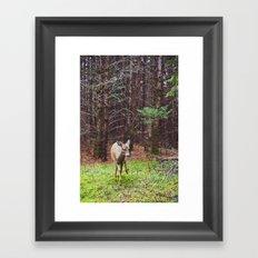 deer 2.  Framed Art Print